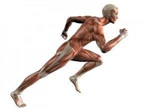 Qué músculos estirar en el fútbol